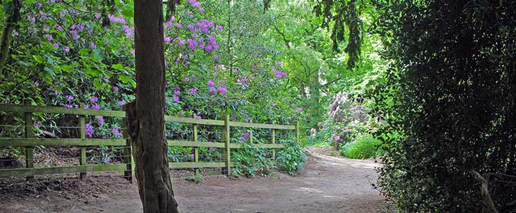 Woodland path in Bramcote Hills Park