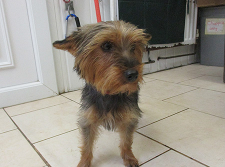 A small female dog rescued by the Neighbourhood Wardens