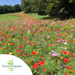 picture of a wildflower meadow with the green futures logo